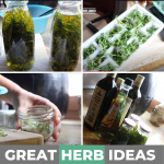 4 EASY HACKS TO USE HERBS FOR COOKING